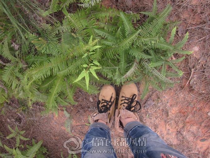 猜我表妹脚边的植物名字 信宜话 今日 猜我表妹脚边的植物名字 信宜