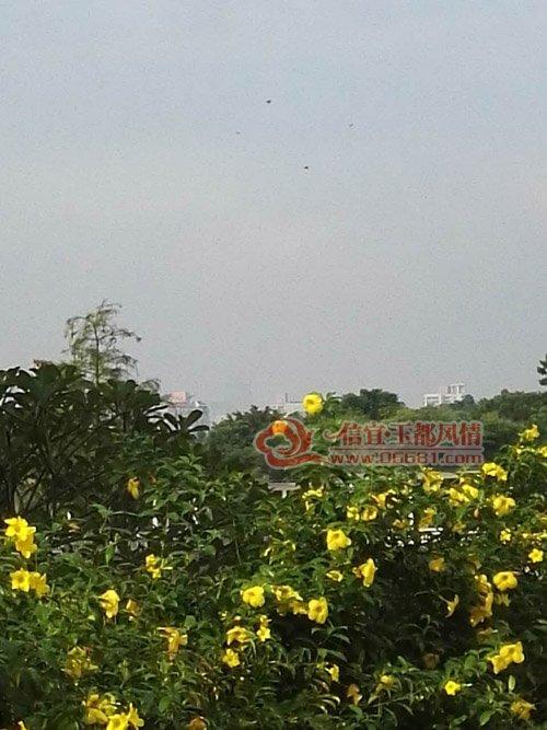 宜玉都风情网 台风 海马 来临前夕的深圳莲花山公园园景台风 海马